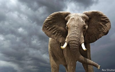 Conserve elephants. They hold a scientific mirror up to humans